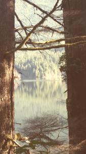 buntzen lake rainforest port moody